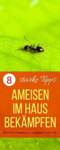 Ameisen im Haus bekämpfen - was tun gegen ameisen in der küche