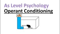 What is operant conditioning? In this lesson we will answer these questions and see how it can be used to explain why people attach to. A Level Revision, Psychology A Level, Operant Conditioning, Why People, Explain Why, Caregiver, Conditioner
