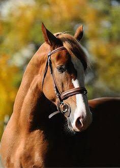 Image result for caturday summer horse