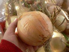 Килограммовый лук из семян за один сезон.