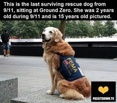 Last surviving rescue dog from 9/11