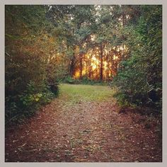 Another day full of possibility dawns. What will you do with it? #sunrise #fall #autumn #path #trail #sun #sky #trees #nature #silverlox #outdoors #beauty