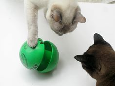 @Erin Morris ,  Bat-A-Rat, a feeding, foraging, and exercise toy for cats