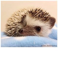 """""""…I sure do hope my quills stay sweet. G'night!"""" 