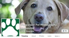 Melbourne pet photographers bringing the Pupparazzi experience to dog lovers homes across Australia with cute and candid photos of your furry friends.