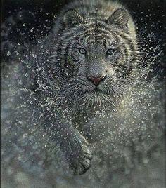 Spectacular Shot!