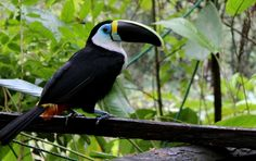 Amazon Animals, Lead Adventure, Volunteer Programs, Animal Welfare, Volunteers, Ecuador, Abandoned, This Is Us, Community