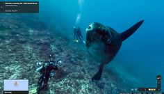 You Can Now Explore The Oceans With Street View