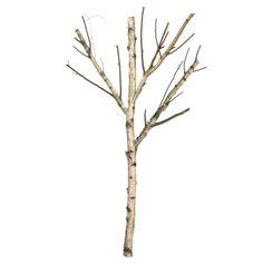 Birkenstamm mit 3 Ästen natur Höhe:  200 cm, Ø 6 - 8 cm