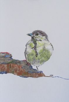 bird on rock / colored pencil on paper 8 x 10 / $45.00