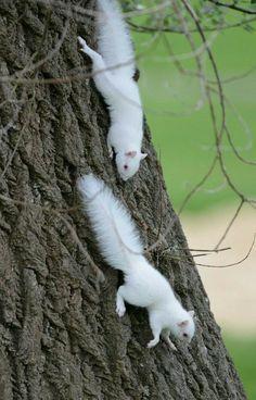 White squirrels inhabit Washington D.C.'s Treasury Museum at the Mall