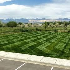 Image result for lawn stripes