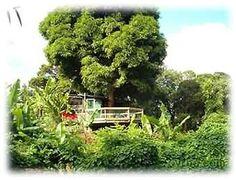 Mango Shack - Kauai