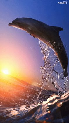 A beautiful dolphin jumping over sunset
