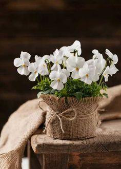 Raindrops and Roses Flower Centerpieces, Flower Arrangements, Beautiful Gardens, Beautiful Flowers, Raindrops And Roses, Garden Shop, Colorful Garden, Love Wallpaper, Begonia