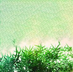 Green bamboo leaves on a green abstract background Bamboo Leaves, Background S, Abstract Backgrounds, Art Designs, Fine Art America, Digital Art, Shops, Herbs, Community
