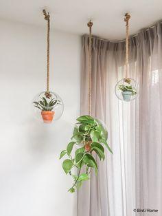 Hanging Planters, Planter Pots, Best Flower Pictures, Green Life, Living Room Lighting, Plant Hanger, Flower Pots, Flowers, Indoor Plants