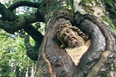 The head of a savior figure in red sandstone, grown into the trunk of a 300-year wind beech in the Black Forest, Germany. Around 130 years ago, the entire monument, the savior on the crucifix was leaning against the tree. Over time the tree has enveloped the majority of the sandstone sculpture. (AP Photo)