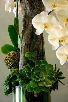 Driftwood arrangement: orchids and succulents with driftwood Decoration Buffet, Bouquet Champetre, Sogetsu Ikebana, Orchid Arrangements, Flower Arrangement, Cactus Y Suculentas, Cacti And Succulents, Dream Garden, Air Plants