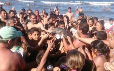 Wildlife group warns holidaymakers that the vulnerable mammals should be   returned to sea if they get too close to shore after animal dies at   Argentine resort