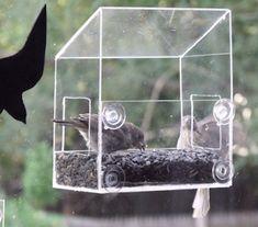 Rehab Or Die: Making a see-through window bird feeder