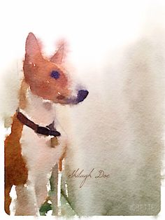 Loyal Basenji Rescue, Shilagh Doe Created with Waterlogue
