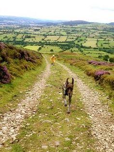 Long mynd, shropshire