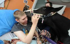 Ben Baldwin, 22, has cerebral palsy, severe epilepsy and learning difficulties He is often too ill to leave his bed and go outside to visit his horse, Tiger So, his family bring the piebald cob into his bedroom to see him His mother, Liz, 45, said the pair are best friends, adding: 'Ben absolutely adores Tiger. His face lights up when he sees him'