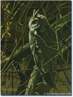 """Winter Willows"" Owl Art by Anne Peyton"