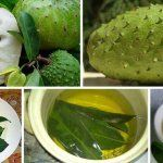 Graviola or Soursop an exotic fruit that has specific taste and numerous health benefits. People for centuries used the bark, leaves, and the root of Graviola tree in order to treat and prevent many health conditions. Effective Against Cancer Here's. Home Remedies, Natural Remedies, Herbal Remedies, Health Remedies, Health Benefits, Health Tips, Soursop Benefits, Health Chart, Health Blogs