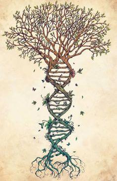 raíces naturales