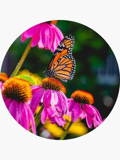 Butterfly Photograph' Sticker by love-fi My Scrapbook, Scrapbooking, Cool Stickers, Monarch Butterfly, Sticker Design, Spice Things Up, Photograph, It Is Finished, Cool Stuff