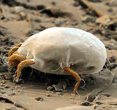 iG Colunistas – O Buteco da Net - » Usando microscópio eletrônico, jornal britânico exibe impressionantes fotos de insetos