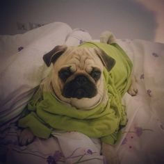 """0 Likes, 1 Comments - Olaf Pugescu (@olipug2016) on Instagram: """"How do I look in my dad's t-shirt?"""""""