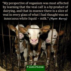 veal & the dairy industry. they are completely interconnected. you cannot eradicate one while supporting the other.