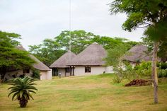 The Safari Lodges set in open parkland - the buck & giraffes wander freely . Giraffes, Lodges, Cottages, Wander, Safari, Wildlife, House Styles, Cabins, Cabins