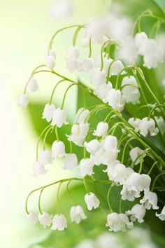 Lily of the Valley, Matt 6:28-32. The bible offers a clear perspective on life to take hold of. Unconditional love.