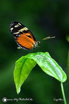 ~~Butterfly by Isy Man~~