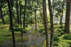 A Japanese forest garden