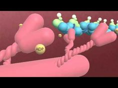 Best Sliding Filament theory explanation video I've found so far.