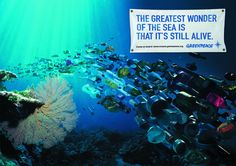 """The greatest wonder of the sea is that it's still alive"" ~Greenpeace"