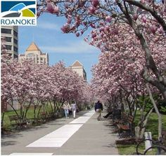 Springtime in Roanoke, Virginia | Lauren Riner, Realtor | www.happyhomeva.com