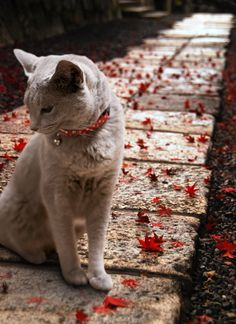 Scarlet and White sweet, but kitties shouldn't have to wear bells on their collars