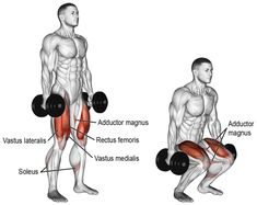 Dumbbell squat A major compound exercise Target muscles Gluteus Maximus and Quadriceps Synergists Adductor Magnus and Soleus Dynamic stabilizers not highlighted Hamstring. Dumbbell Squat, Barbell Squat, Dumbbell Workout, Squat Exercise, Trapezius Workout, Dumbbell Exercises, Body Exercises, Health Exercise, Strength Training Workouts