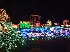 Holiday Lights are a great site at the Bellevue Botanical Gardens - Cheryl Nygaard, Windermere Real Estate