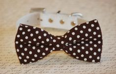 Brown Polka Dots bow tie attached to leather dog by LADogStore, $29.99  #BrownPolkaDots #PolkaDots #Polka #Dots #PolkaDotsWedding #Brown #PolkaDotsWedding #Unique #Wedding #UniqueWedding #amazing #Cute #Pretty #LADogStore #LA #Dog #Store #Shop #Buy #Gifts #DogGifts #Gift #DogCollar #DogBowTie #BowTie #Bow #Tie #Collar #Fabulous #DogAccessory #Accessory #Pet #Animal #Accessories