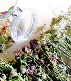 Kuu yrttitarhassa: Villiyrttien keruukalenteri Edible Wild Plants, Fungi, Preserves, Herbalism, Berries, Healthy Recipes, Healthy Food, Vegetarian, Zero Waste