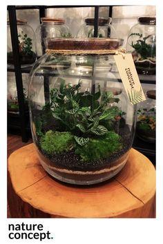 Terrariums, Cactus Terrarium, Mini Terrarium, Garden Terrarium, Glass Terrarium, Plants In Jars, Air Plants, Pet Snails, Bottle Garden