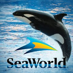 The killer whale star of 'Blackfish' responds to Sea World's smear campaign against activist and former trainer John Hargrove, who said the N-word while drunk five years ago.
