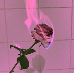 Recently shared pink aesthetic grunge dark ideas & pink aesthetic Aesthetic Colors, Bad Girl Aesthetic, Flower Aesthetic, Aesthetic Collage, Aesthetic Grunge, Aesthetic Pictures, Aesthetic Drawings, Pink Tumblr Aesthetic, Aesthetic Clothes